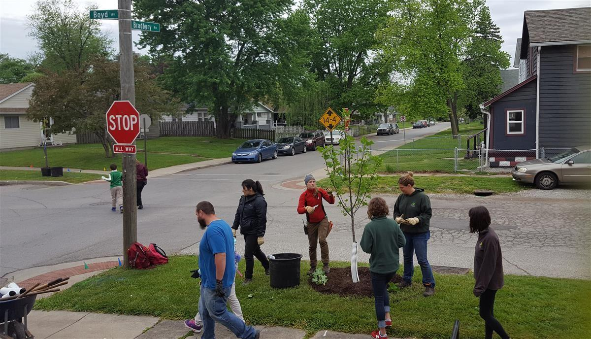 Eleanor Skillen students and staff planting trees
