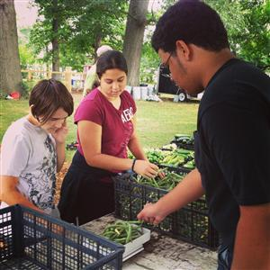 Gambold Preparatory High School students sort vegetables at Seven Steeples Farm.