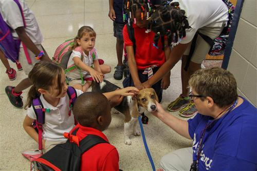 IPS/Butler Lab School student pet their new classmate, a beagle named Dodger.